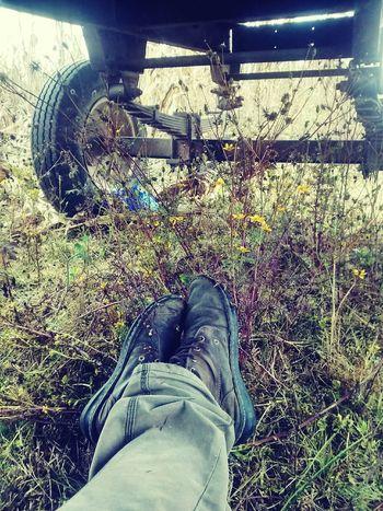 Dia de cosecha Campo Maiz Farm Shoes Flores Yerba
