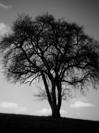 black tree Black & White Branches Holga Holga Photography Tree Art Bare Tree Beauty In Nature Black Black And White Blackandwhite Blackandwhite Photography Branch Day Holga Digital Holgalens Landscape Lone Nature No People Outdoors Scenics Sky Tranquility Tree