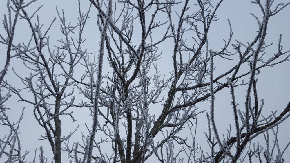 Hoarfrost Frosty Mornings Frosty Grey Hoary Hoarding Hoar Frost Rime On Tree Rime Freezing Cold Freezing White Background Icecold Winter_collection Cold Days Cold Winter ❄⛄ Cold Temperature Cold White Color New Winter Sky White Wintertime Winter Ice