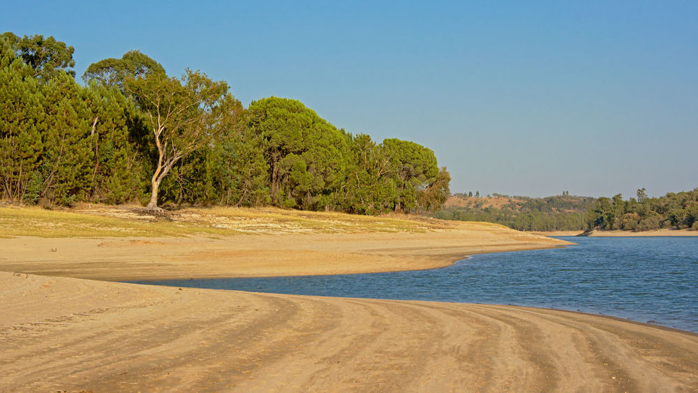 Sunny landscape with maquis vegetation on the beach of `Baragem de Montargil` lake near Portalegre, Portugal, which has a very low water level due to rain staying out for weeks Mediterranean  Portalegre Shrub Roses Trees Arid Climate Barragem Barragemdemontargil Beach Beauty In Nature Clear Sky Copy Space Dry Land Montargil No People Outdoors Portugaldenorteasul Scenics - Nature Shrub Sky Soil Tranquility Tree Water