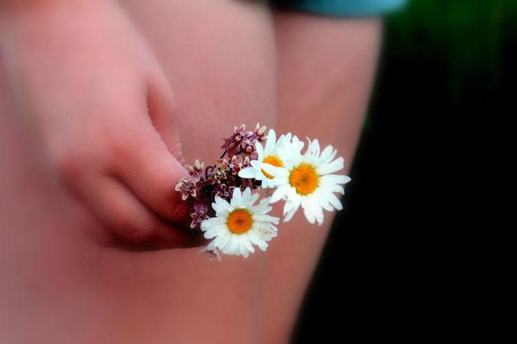 Close-up of cropped hand holding daisy