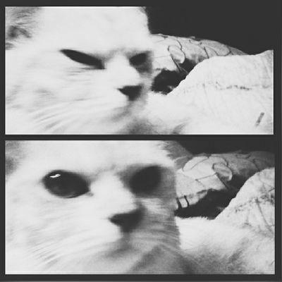 Kucingku Sayang Instasquare Vscogrid VscoCreative VSCO Vscocam Vscomalaysia Vscobest Vscodaily VSCO Photogrid Picoftheday Photooftheday Igaddict Igers Igers_kolumpo IgersMy Igersmalaya Igers_perak Sematnatang Instalike Instamood Instagrammers Instadaily Instagood Cat meow