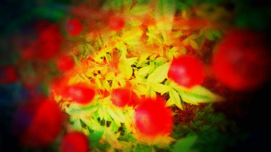 """""""hit solo, Editjunky EyeEm Nature Lover EyeEm Best Edits EyeEm Gallery OpenEdit Digital Eye Masters Urban Nature TreePorn Berries Macroclique"""
