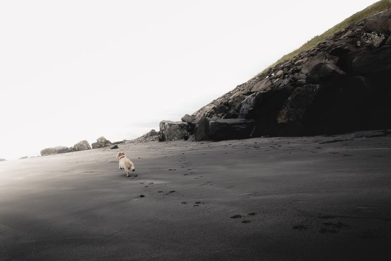 Pets One Animal Animal Themes Domestic Animals Dog Rock - Object Nature Outdoors No People Sea Sand Sky Beach Landscape Landscape_Collection Nature Beachphotography Sandy Scotland Pet Animal Dogs Nature_collection EyeEm Nature Lover Running Perspectives On Nature