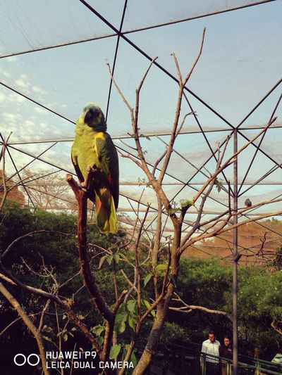 Low Angle View Bird Animal Themes No People Nature Tree Parrot One Animal Green Color Animals In The Wild Animal Representation