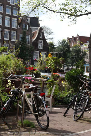 Amsterdam Green Color Architecture Bicycle Bicycles Bikes Building Exterior Built Structure City Day Flower Flowers Jordaan Land Vehicle Mode Of Transport Nature No People Outdoors Transportation Tree