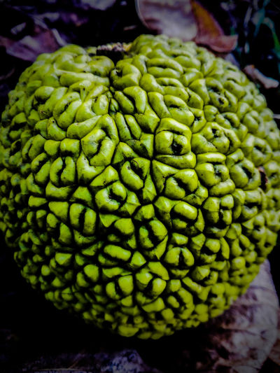 Maclura Pomifera Maclura Green Color Green Beauty In Nature Collor Of Life