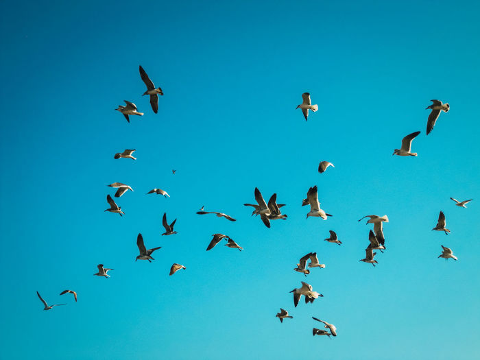 flying birds in blue sky Animal Animal Themes Animal Wildlife Animals In The Wild Bird Birds Birds In Flight Clear Sky Flying Flying Bird Flying Bird In Blue Sky Flying Birds Group Of Animals Nature Sky Spread Wings Capture Tomorrow