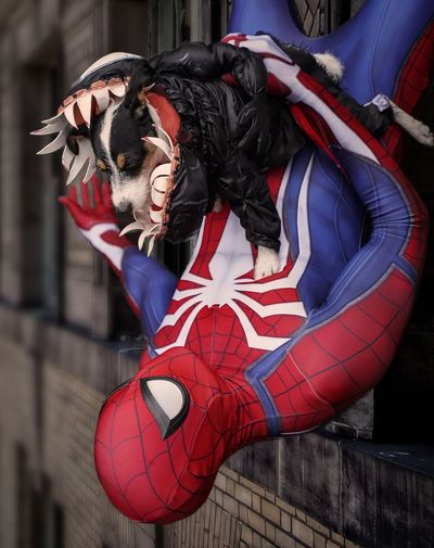 Spiderman v Venom Dog Venom Spiderman Cosplayer Cosplay Nycc2018 NYCC Costume Real People One Person Clothing Red Celebration Day Lifestyles Stage Costume