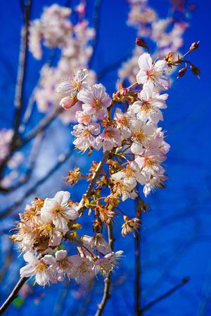 Perspectives On Nature Flower Fragility Blossom Beauty In Nature Springtime Branch Growth Tree Cherry Blossom Apple Blossom Freshness Apple Tree Nature Orchard Botany Petal Almond Tree White Color Cherry Tree Twig