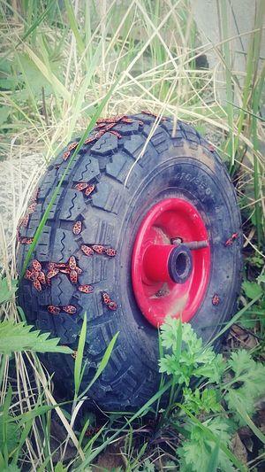 Feuerwanzen besiedeln Rad! Feuerwanze Firebugs Check This Out Bugs RAD Gräser EyeEm Nature Lover Grass