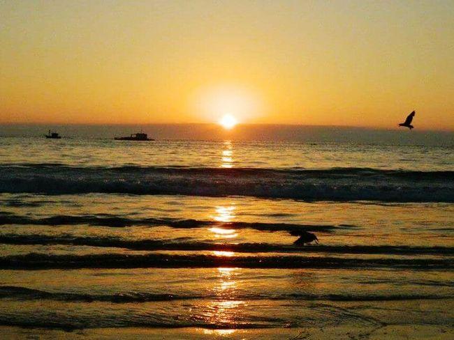 Iquique Chile  Iquique Atardecer Sol Birds Beautiful Nature Playa Sunset