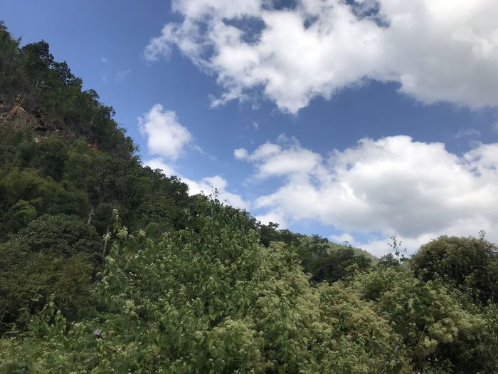 Low angle view of trees and plants against sky