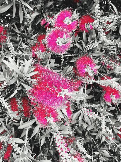 Flowers Effects