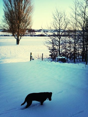 Snowy dog in Tadcaster
