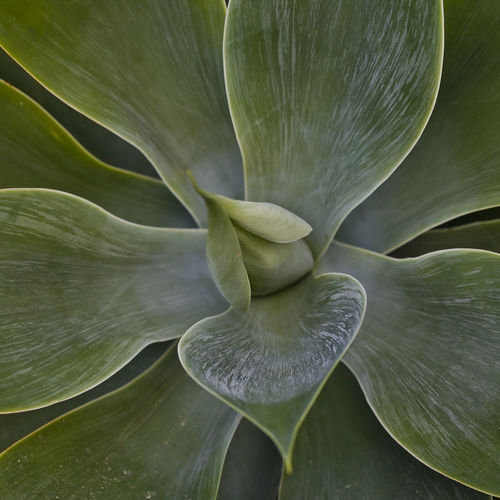 Close-up of flower