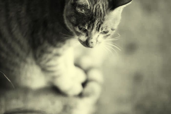 Cat Hello World Enjoying Life IPhone