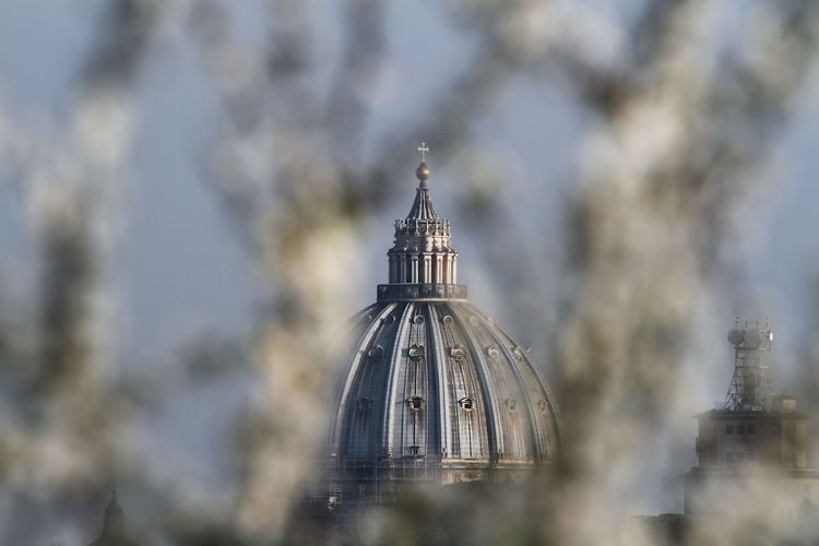 Jasmine branches in the foreground and in the background the dome of st. peter's basilica in rome