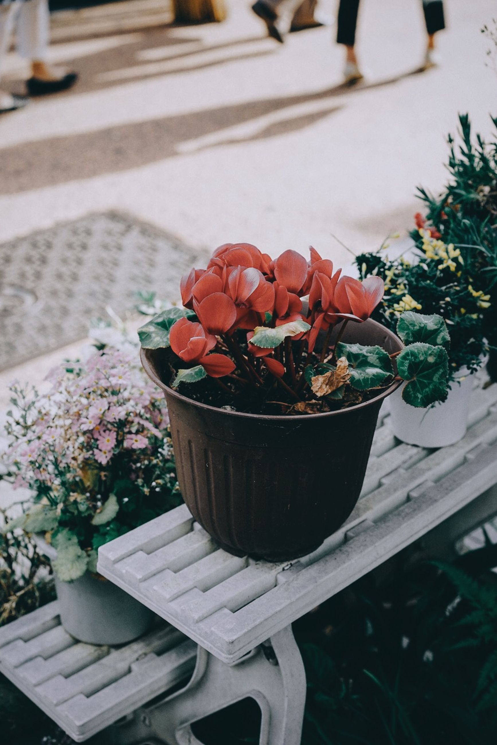 freshness, food and drink, focus on foreground, close-up, flower, red, potted plant, leaf, food, plant, growth, outdoors, selective focus, day, no people, table, fruit, nature, healthy eating, sunlight