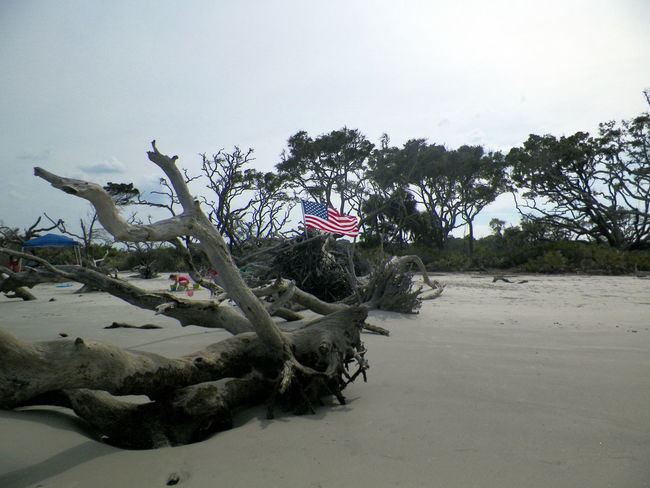 Beach Beauty In Nature Clear Sky Copy Space Day Growth Jekyll Island Nature No People Outdoors Plant Sand Sea Shore Sky Tranquility Tree Water