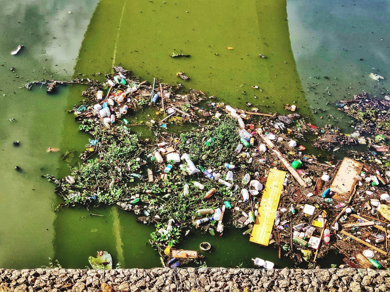 water, pollution, no people, nature, garbage, water pollution, unhygienic, environmental issues, high angle view, day, environmental damage, green color, outdoors, lake, social issues, animal, dirty, floating on water