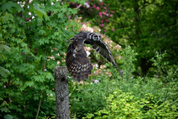 Animal Animal Wildlife One Animal Bird Outdoors Nature Animals In The Wild No People Bird Of Prey Owl