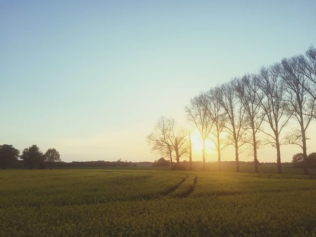 Sky Plant Field Tranquility Tranquil Scene Tree Landscape Scenics - Nature Growth Clear Sky Environment Land Beauty In Nature Sunset Copy Space Nature Sun Sunlight Agriculture Rural Scene