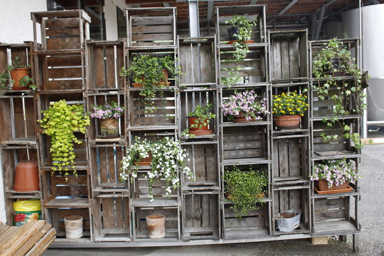 Plant Growth Potted Plant No People Day Architecture Store Window Outdoors Built Structure Building Exterior Large Group Of Objects Wood - Material Arrangement Shelf Retail  Variation In A Row Business Choice Retail Display Flower Pot