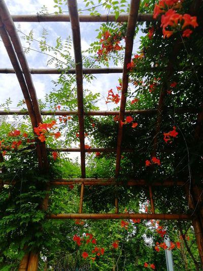 Greenhouse Tree Flower Sky Plant