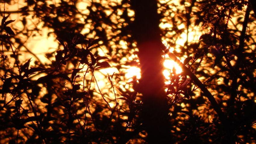 Beauty In Nature Orange Color Sun Sunbeam Sunlight Sunset Tree Trees
