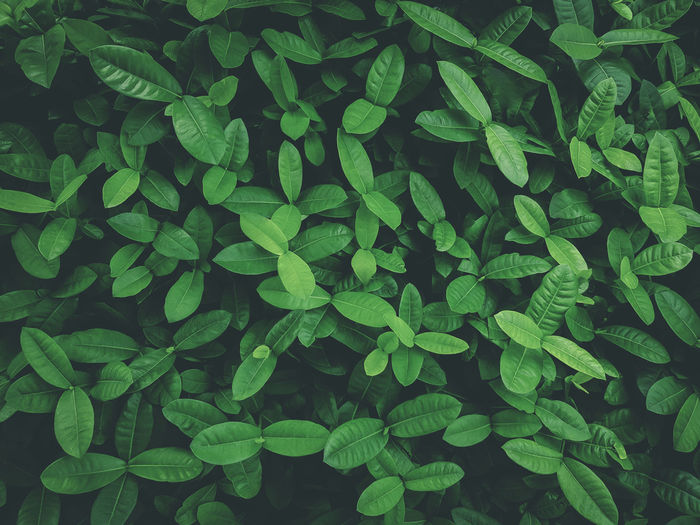 Tropical leaves, abstract green leaves texture, nature background. vintage