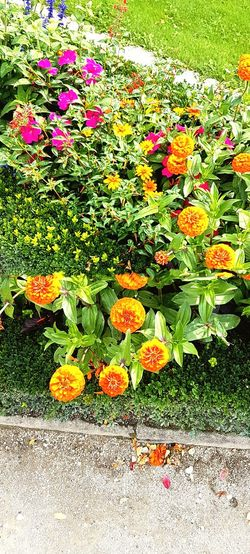 Flower Nature Beauty In Nature Growth Day Outdoors Plant Freshness PetalScenery Germany 🇩🇪 Deutschland Orange Orange Color Leaf No People Flower Head Grass Blooming Pink Flowers Pink Flower Flowers Red Flower Springtime Flowerbed Growth