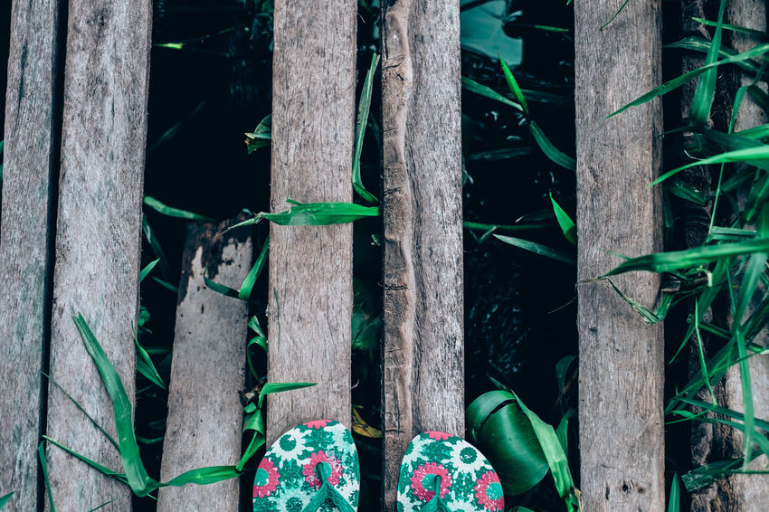 Slippers shot before crossing this semi broken coconut lumber bridge :D Adventure Backwoods Bridge - Man Made Structure Broken Exploring Flowery Foot Selfie Forest Green Color Growth Lily Low Section Nature Lifestyles Outdoors Path Real People River Slippers Beauty In Nature Travel Tree Trunk Wood - Material Vacation EyeEmNewHere The Secret Spaces Art Is Everywhere EyeEm Diversity Break The Mold Live For The Story Out Of The Box The Great Outdoors - 2017 EyeEm Awards Place Of Heart Sommergefühle Let's Go. Together. Neon Life Breathing Space Investing In Quality Of Life Summer Exploratorium Visual Creativity
