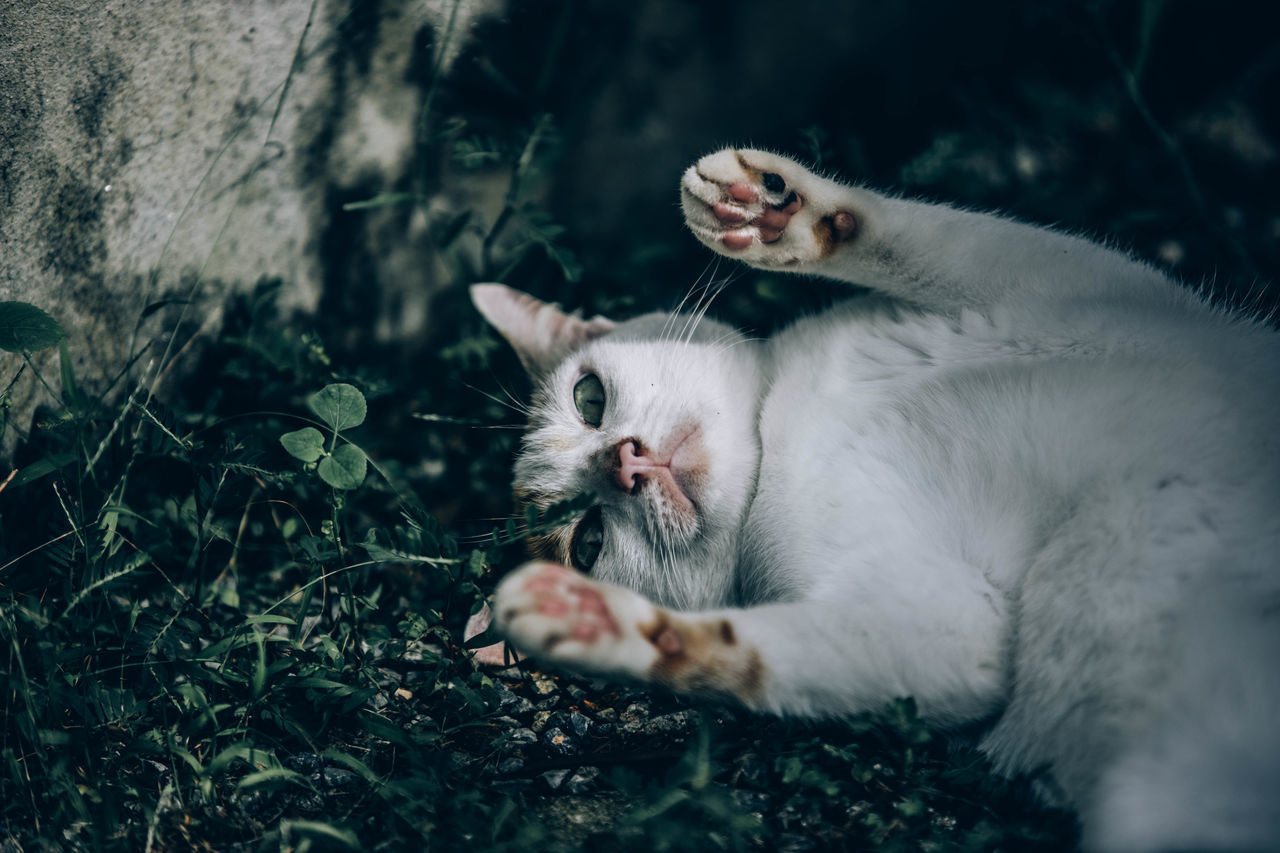 PORTRAIT OF CAT RELAXING ON A GREEN