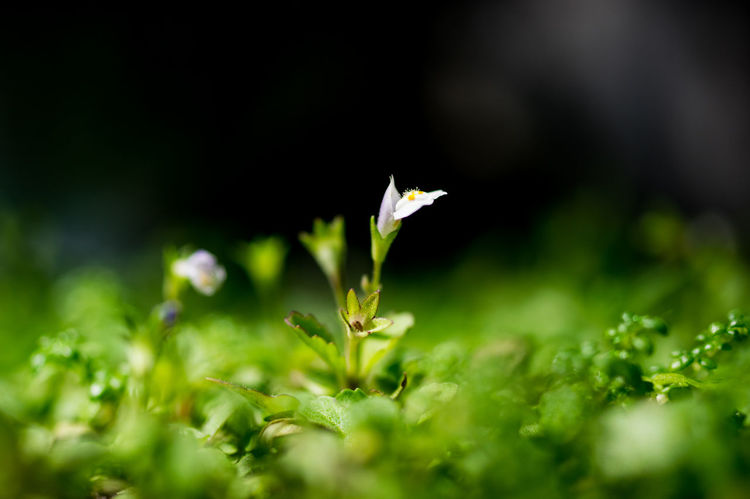 New life Beautiful Nature Flowers Little Lunar New Year Macro Pentax Saigon Showcase: February My Favorite Photo My Obsession❤