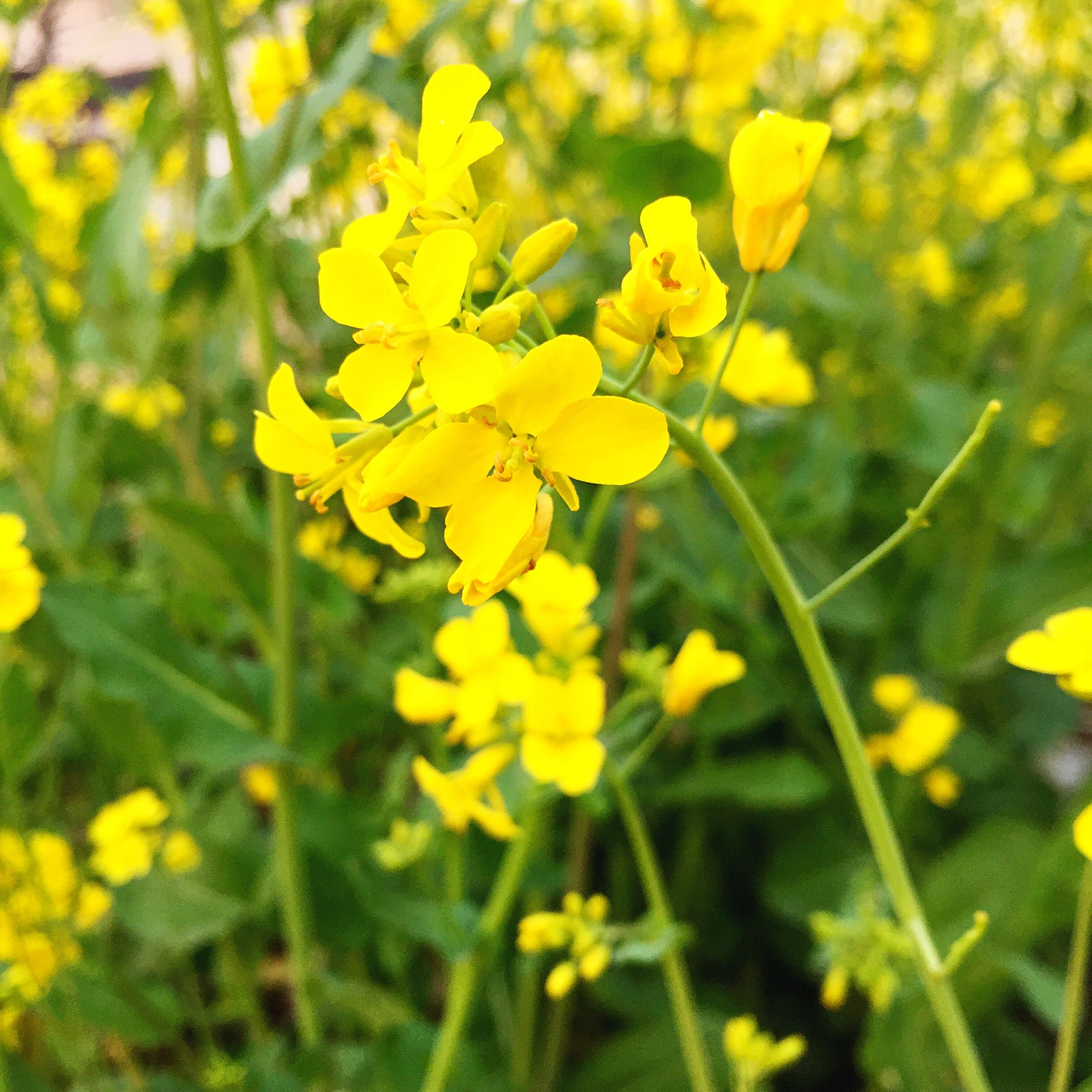 yellow, flower, growth, nature, beauty in nature, petal, plant, fragility, blooming, no people, freshness, close-up, flower head, outdoors, day