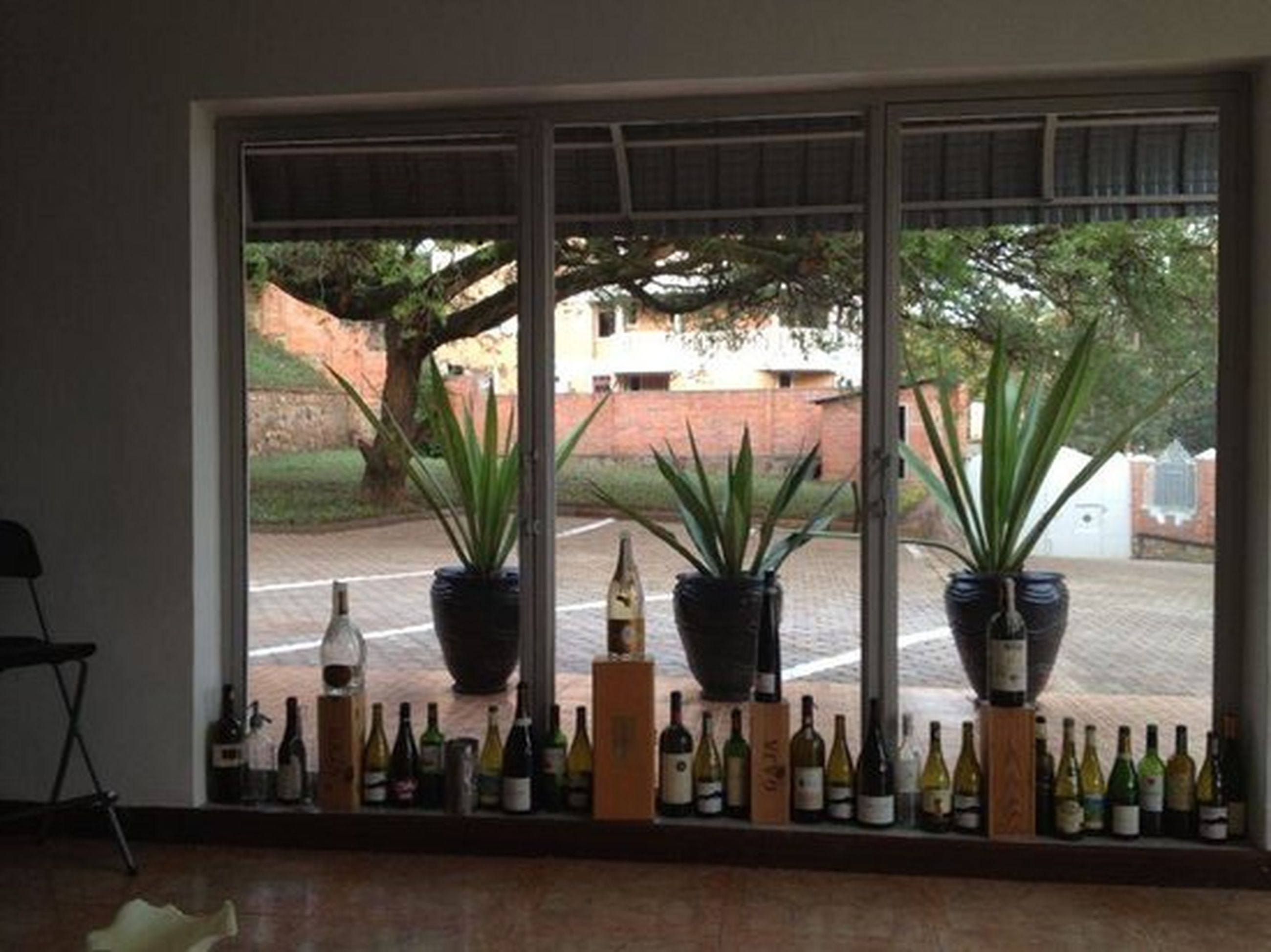 indoors, window, vase, table, potted plant, plant, built structure, architecture, group of objects, variation, tree trunk, growth, glass, tourist resort, arrangement, day, place setting