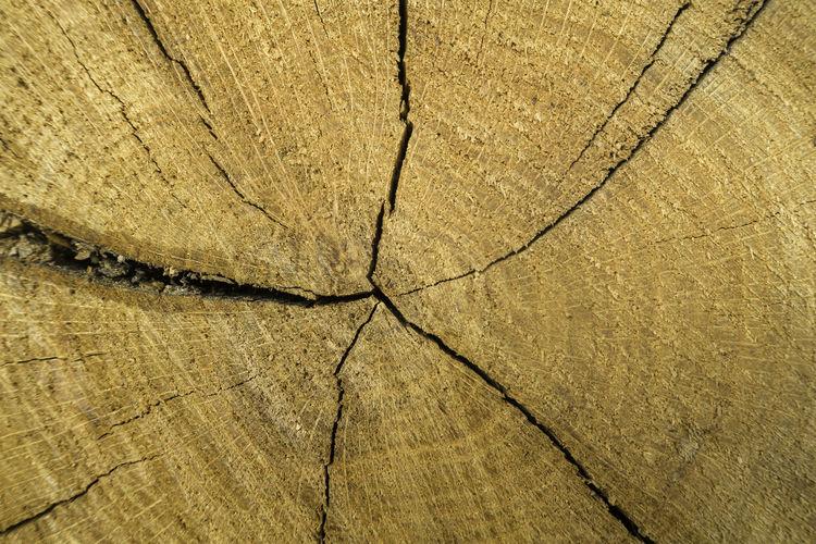 Full frame shot of cracked tree