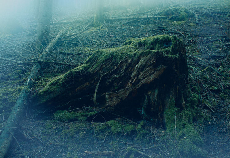 Death Eye Foggy Weather Horoor Nature No People Tree Trunk