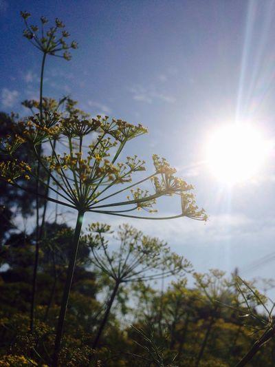 Sun Nature Sky Growth Plant