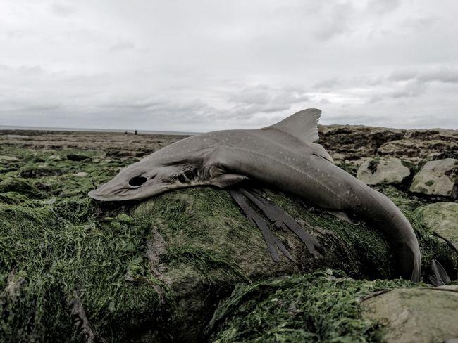Dead Fish Dark France 🇫🇷 DEAD FISH
