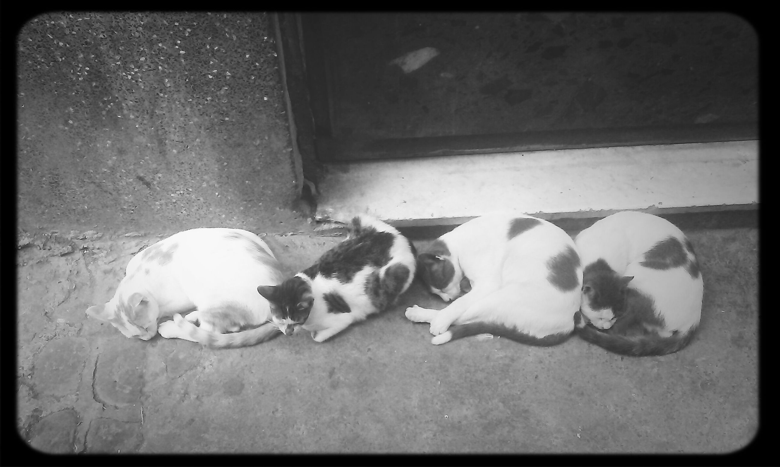 transfer print, domestic animals, animal themes, pets, mammal, dog, auto post production filter, one animal, relaxation, sleeping, indoors, lying down, resting, two animals, high angle view, full length, togetherness, day, no people, sitting