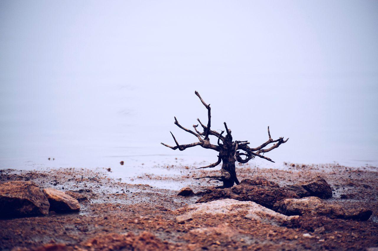 Driftwood On Beach Against Clear Sky