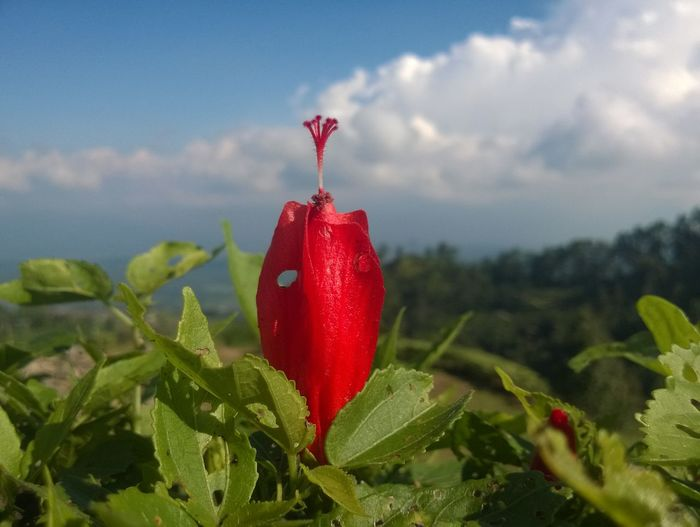 High angle view on the mountain. taken by lumia 720 Lumia 720 Beauty In Nature Day Flower Freshness Lumia Mountain Range Nature No People Outdoors Red Sky
