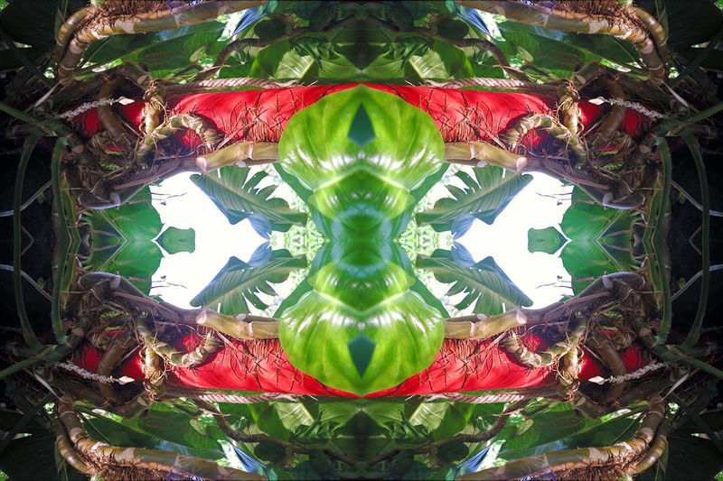 Organic Artwork with Palmtree Close-up Colours Green, Red, Light And Colors Light And Shadow Mystic World Of Nature No People Organic Artwork Palm Tree Reflection Psychedelicart Pull Effect, Wallpaper Design Perspectives On Nature