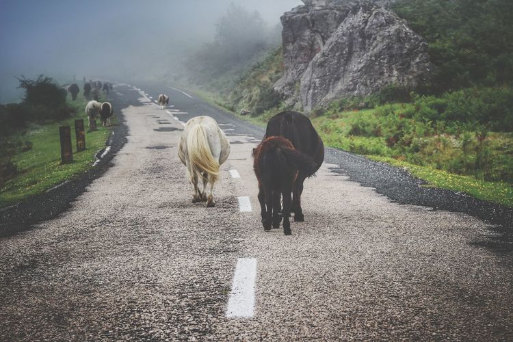 Animals walking on road by mountain