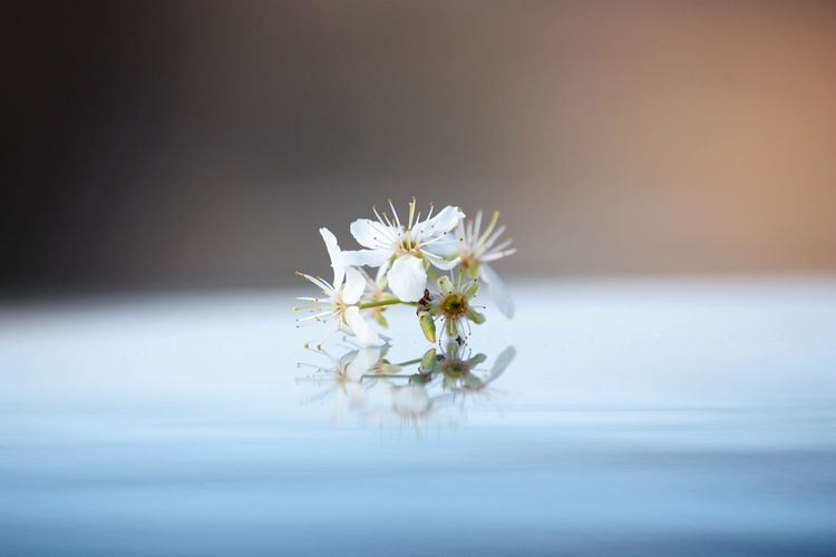 Hello World Hello April 🌸 Season  Cherry Blossoms White Cherry Blossom Spring Spring Flowers Details Of Nature Closeup Reflections Taking Photos Enjoying Life Outdoors Details Click Click 📷📷📷 Hello Spring!