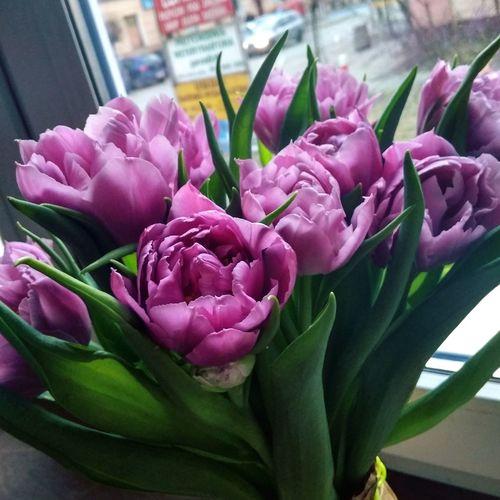 Flower Head Flower Bouquet Pink Color Peony  Petal Close-up