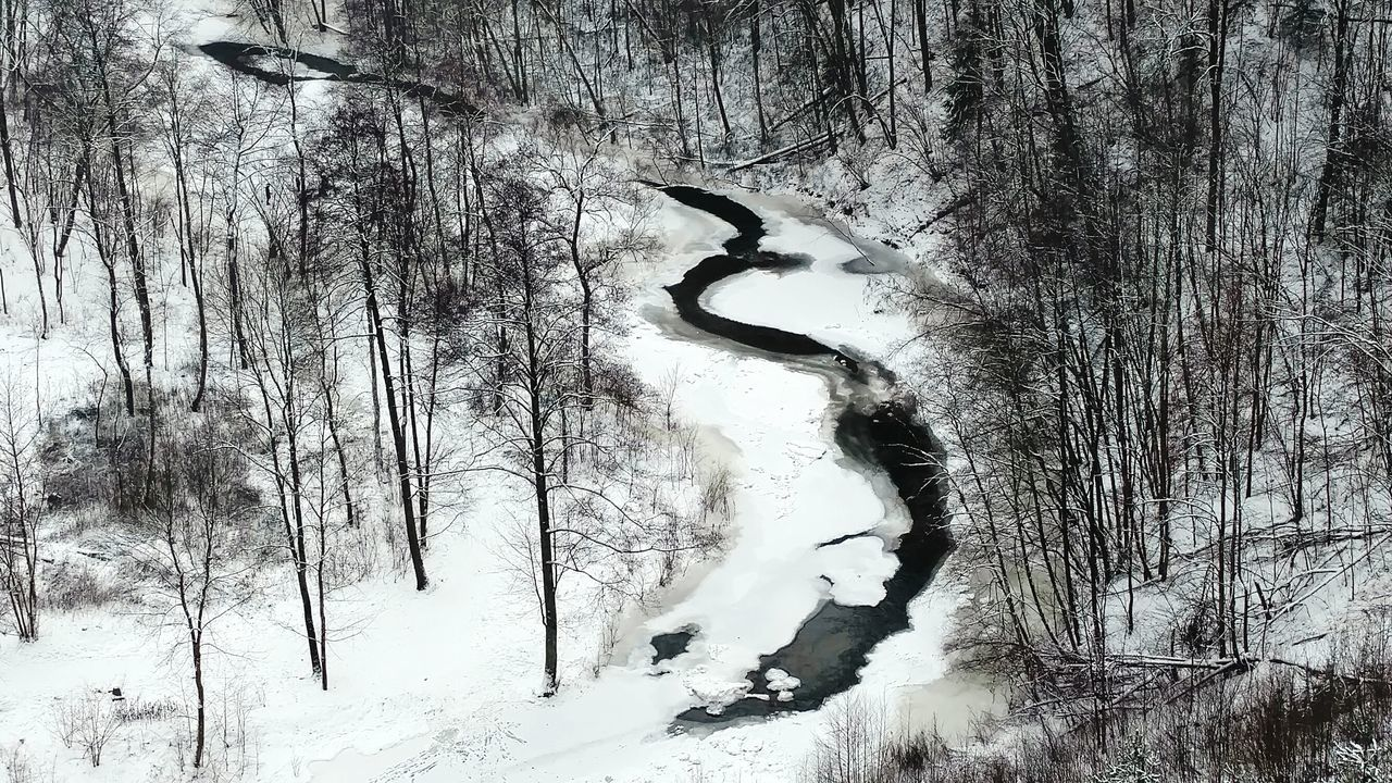 Stream Amidst Trees During Winter