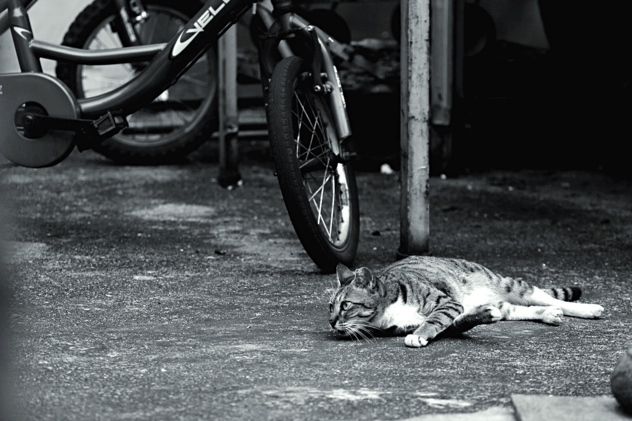 transportation, animal themes, animal, one animal, mammal, mode of transportation, vertebrate, lying down, bicycle, street, land vehicle, day, pets, relaxation, no people, domestic animals, cat, domestic, city, feline, wheel, whisker